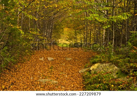 A lot of fallen leaves along forest mountain road at autumn, Radocelo mountain, central Serbia - stock photo