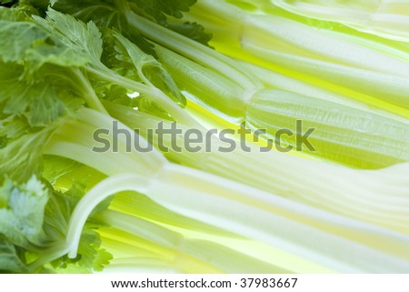 A lot of fresh celery on the table.