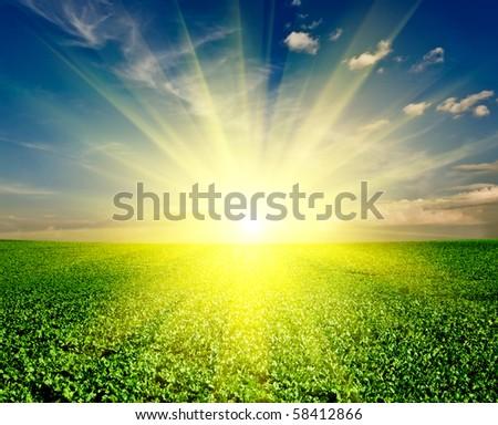 a lot of green grass under blue sky - stock photo