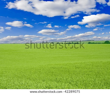 a lot of green wheat under  sky