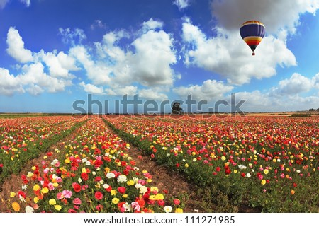 A lot of lovely blooming buttercups and shining clouds. Over the blossoming field of flying a balloon - stock photo