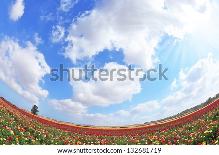 A lot of lovely blooming buttercups  and the shining cloud. Hot Spring in the hot south. Photo taken fisheye lens - stock photo