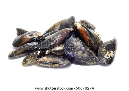 a lot of mussels isolated on a white background - stock photo