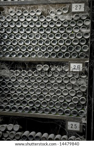A lot of old wine bottles covered with dust and spider's web in curing cellar