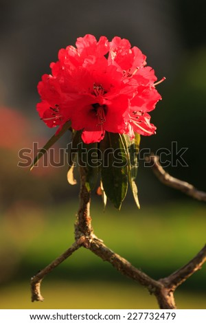 a lot of red Flower in many style - stock photo