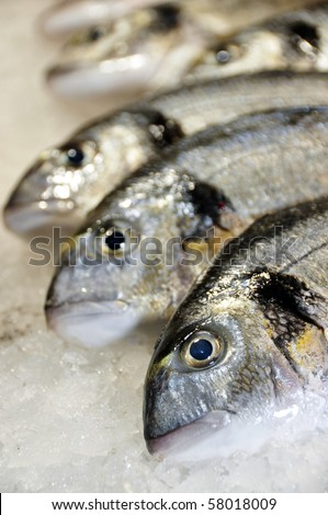 a lot of sea breams ready to sale - stock photo