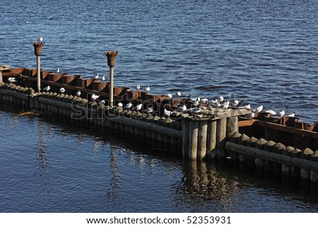 a lot of seagulls - stock photo