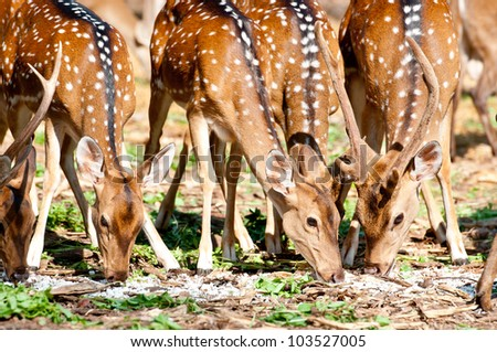A lot of spices of Deers in Thailand Wild. - stock photo