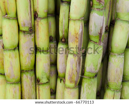 a lot of sugar cane for sale in the market - stock photo