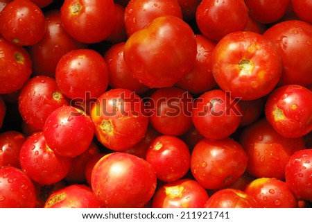 a lot of tomatoes with waterdrops
