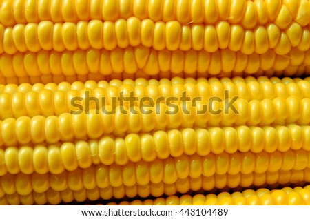 a lot of yellow corns as a background - stock photo