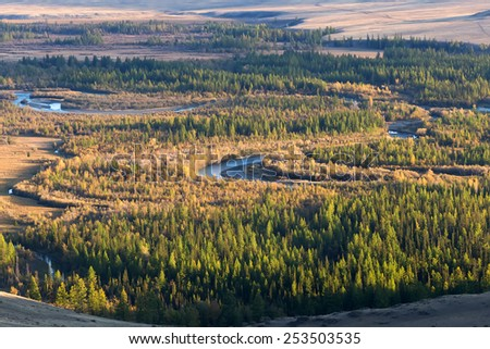A lot of yellow larches and crystal clear water in a mountain river, autumn in Altai mountains, Siberia, Russia - stock photo