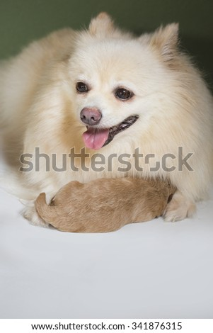 A love of mother - stock photo
