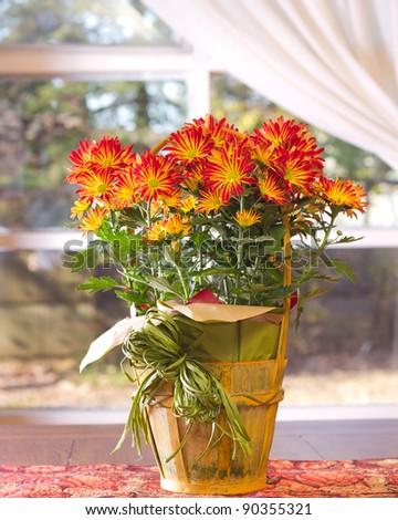 A lovely centerpiece of autumn chrysanthemums - stock photo