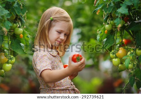 A lovely little girl gathering in ripe tomato harvest in a vegetable garden. Kids are playing. Little helpers. - stock photo