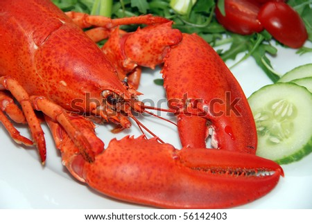 A lovely lobster salad - stock photo