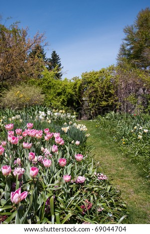 A lovely Spring garden with pink tulips.