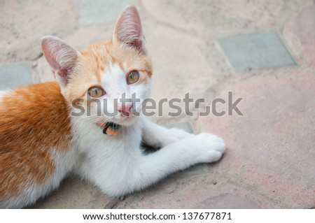 A lovely white-orange cat on the ground