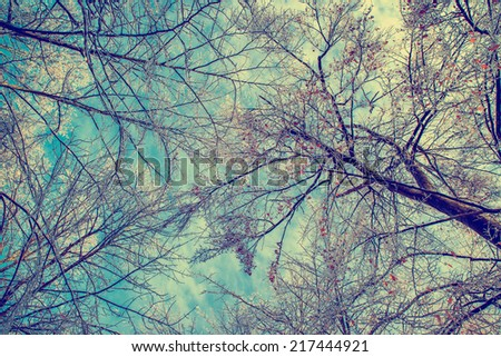 A low angle view of ice covered tree branches after an ice storm during the winter season.  Filtered for a retro, vintage look.  - stock photo