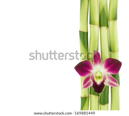 A lucky bamboo stalks and pink orchid flower isolated on a white background. (Ribbon dracaena, Belgian evergreen, Ribbon plant) - stock photo