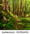 A lush, dreamlike, undisturbed Redwood forest with many ferns in Central California
