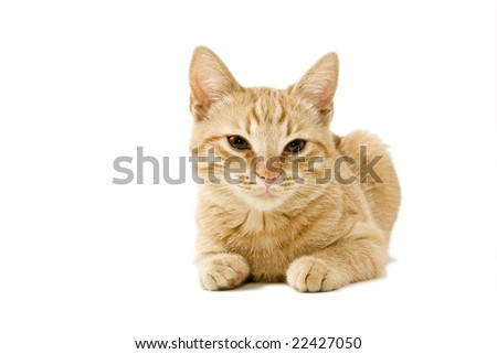 A lying ginger cat isolated on white