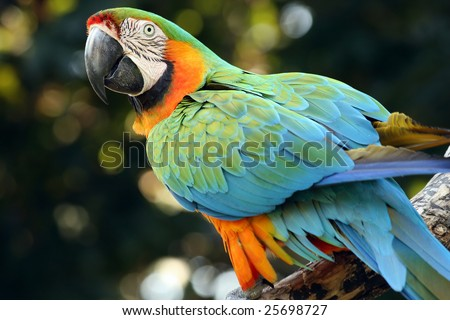 A macaw with an impressive array of colours