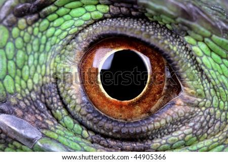 a macro of a fantastic green iguana eye - stock photo