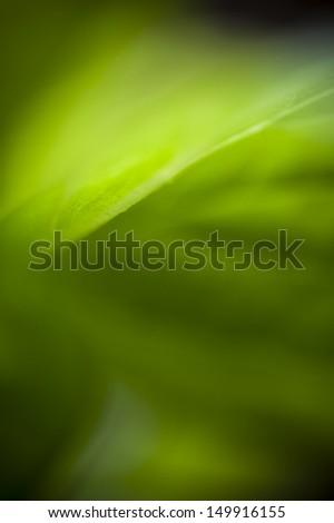 A macro of a green leaf.  - stock photo
