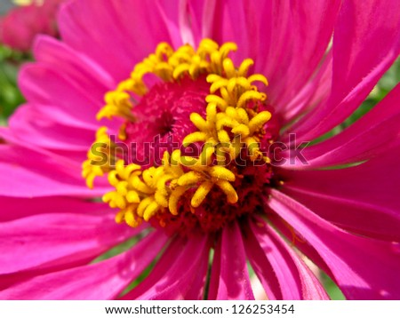 Macro luscious hot pink flower yellow stock photo royalty free a macro of a luscious hot pink flower with a yellow center mightylinksfo Image collections