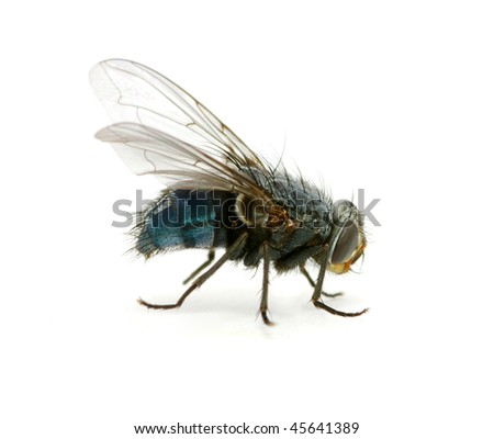 A macro  of  fly