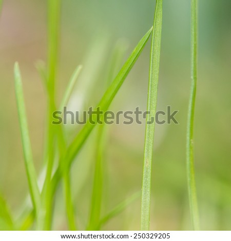 A macro shot focusing on a single blade of grass and using a very shallow depth of field. - stock photo