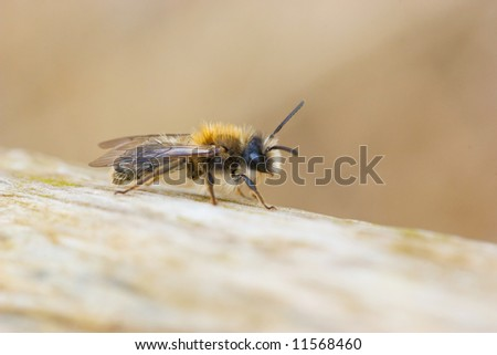 A macro shot of a bee, resting on a branch