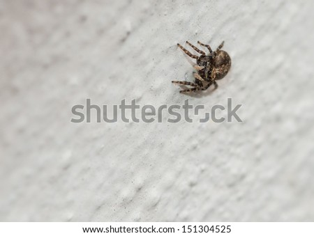 A macro shot of a jumping spider sitting on a wall.
