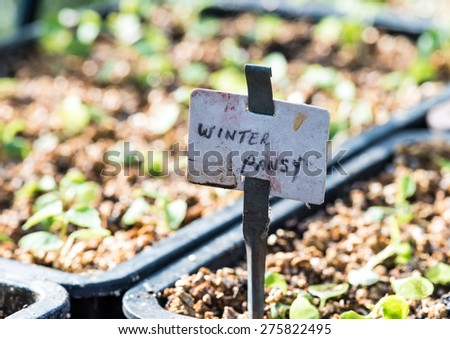 A macro shot of a label documenting the contents of a seed tray. - stock photo