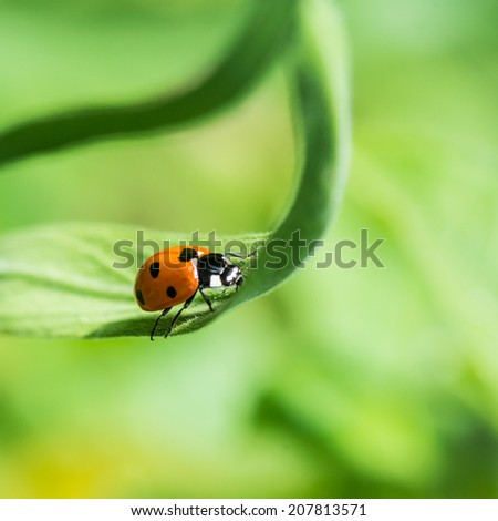A macro shot of a seven spotted ladybird sitting on a green leaf. - stock photo