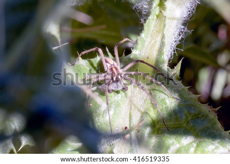 A macro shot of a spider with prey on a leaf - stock photo