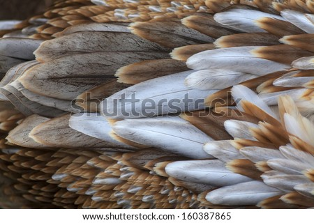 A macro shot of a young pink pelican feathers. Beautiful colorful background of a great bird. - stock photo