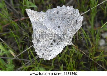 A macro shot of delicate, lacy leaf surrounded by green grass. - stock photo