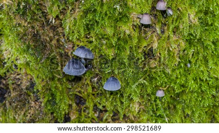 A macro shot of fungi living amongst the moss growing on a tree trunk. - stock photo