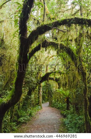 A magical forest path leading to mystery and imagination, deep in the West Coast of Middle Earth, aka New Zealand.
