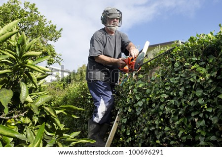 A male gardener trimming plants in a garden with a trimmer. - stock photo