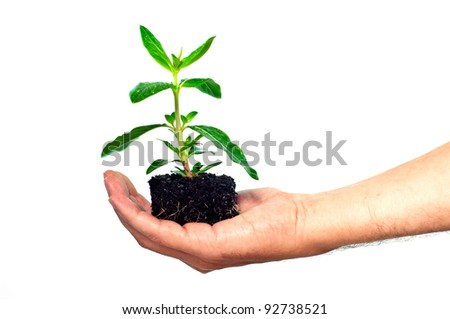 A male hand holding a seedling isolated on a white background