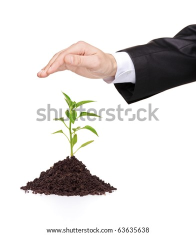 A male hand over a plant protecting it isolated on white background - stock photo