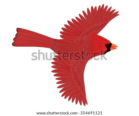 A male Northern Cardinal (Cardinalis cardinalis) in flight illustrated by Steven Russell Smith. - stock photo