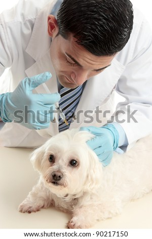 A male vet inserting a needle syringe into the back scruff of a pet dog's neck - stock photo