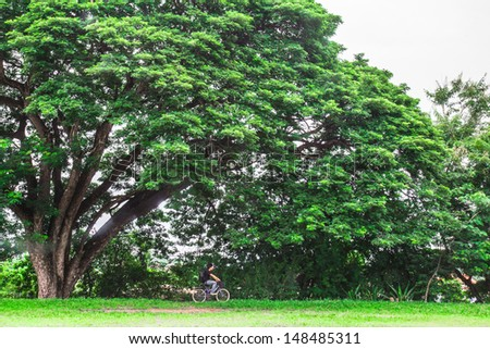 a Man bicycle on big tree park - stock photo