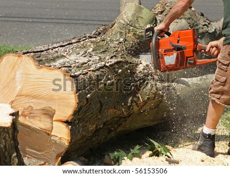 A man chops a fallen tree into logs with a chainsaw