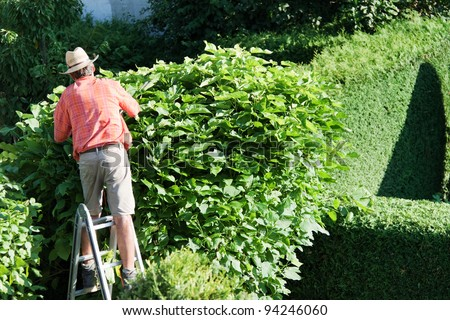 a man cutting a hedge in the garden. yard work.