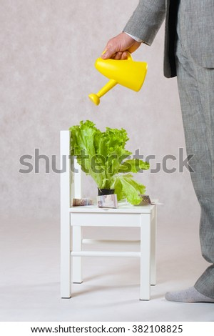 A man dressed in a classical costume is watering the plant in a pot. Closeup